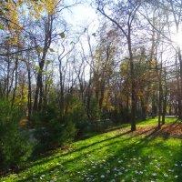Ноябрь в парке... :: Тамара (st.tamara)