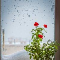 И снова зима... :: Станислав Сорокин