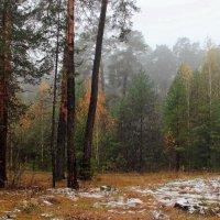 Полян промокшие нахмуры... :: Лесо-Вед (Баранов)