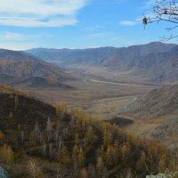 На перевале Чике-Таман. :: Валерий Медведев