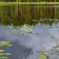 Озеро белых лилий :: Сергей Мошков
