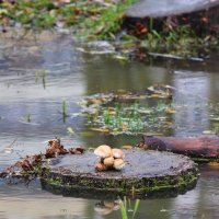 После дождя :: Владимир Марков