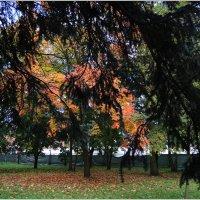 Уже - та осень :: sv.kaschuk