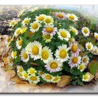 Цветы ноября. :: Чария Зоя