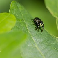 Маленький паук :: Александр Синдерёв