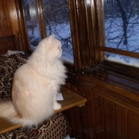 Вот и зима пришла :: Венера Чуйкова