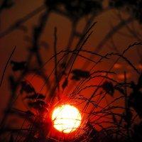 прятки солнца :: Марина Ринкашикитока