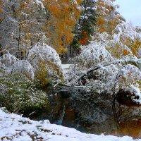 Первый пушистый снежок :: олег свирский