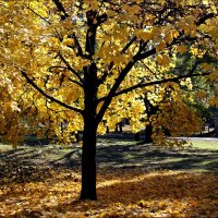 Осень золотая :: Татьяна Пальчикова