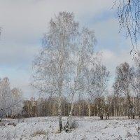 пришла зима :: Николай Мальцев