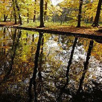 Осень купается :: Alexander Andronik