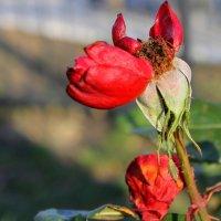Холодный ветер ворожит на листиках замерзших... :: Валентина ツ ღ✿ღ