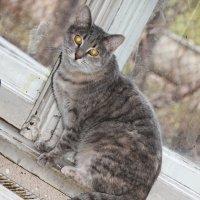 Сидела кошка на окошке.... :: Tatiana Markova