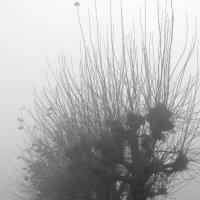 туман в городе :: Надежда Водорезова