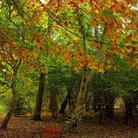 Осень в Ботаническом саду :: Сергей Карачин