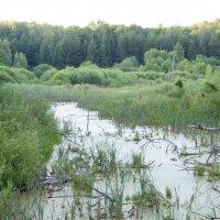 Реликтовое болото :: Анатолий Кузьмин