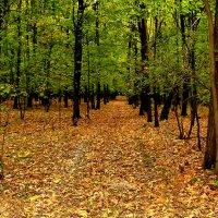 Осень!!! :: Владимир Гришин