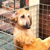 Собачья жизнь :: Гузель Горбунова