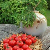 Любителям помидорок :: Татьянка *