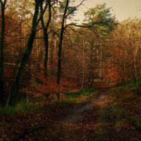 Тропинка в лесу :: Nina Yudicheva