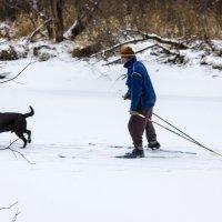 Лыжник и собака. :: Вадим Басов
