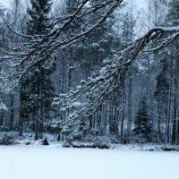 Пришла Зима :: Наталья