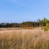 Панорамка под лесом. :: Владимир M