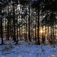 Желаю всем этой зимой попасть в зимнюю сказку и получить кусочек своего счастья!!! :: Вадим Якушев