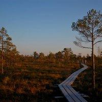Дорога на болота :: Teresa Valaine
