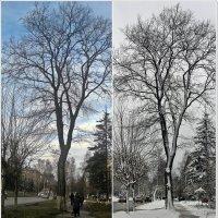 И всё в Ижевске зиму ждёт :: muh5257