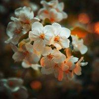 весна :: Наталья Новикова