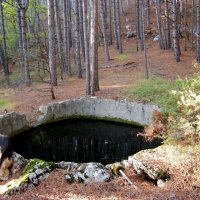Бассейн в лесу :: Руслан Newman
