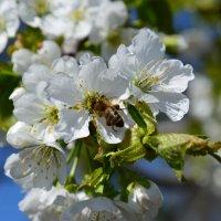Весна :: Полина Гудина