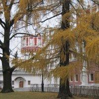 Прогулки по Новодевичьему монастырю. Ноябрь :: Маера Урусова