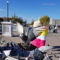 Желающих подкормить сизых бродяг достаточно... :: Anna Gornostayeva