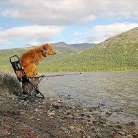 Пчёлка на рыбалке на Кольском полуострове! :: Татьяна Помогалова