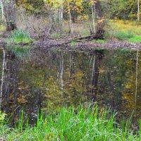 Отражение октября... :: Михаил Болдырев