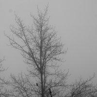Туман в Самаре :: Андрей