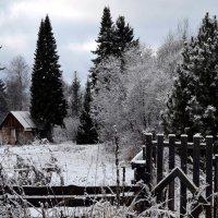Прогулки в ноябре :: Вера Андреева