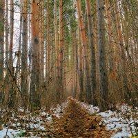 По тропинкам ноября.. :: Андрей Заломленков