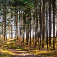 Панорама осеней лесной тропинки :: Анатолий Клепешнёв