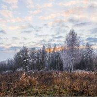 Граница между осенью и зимой :: Светлана Тремасова