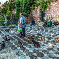 Кормление кошек при мечети Фатиха в Стамбуле :: Ирина Лепнёва