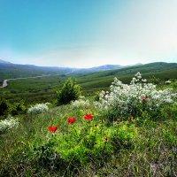 весенний день :: viton