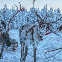 Лапландия 2016! :: Натали Пам
