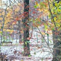Поздняя осень ... :: Kirill