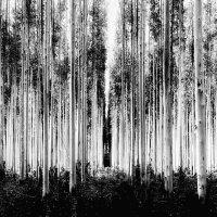 Спектр :: Roman Mordashev