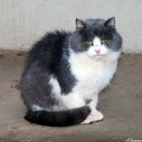 Походу он  думает, что это я его домашнее животное.:) :: Андрей Заломленков