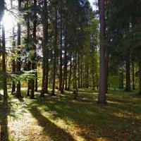 Не глухой лес... :: Юрий Кольцов