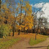В погоне за Золотой осенью... :: Sergey Gordoff